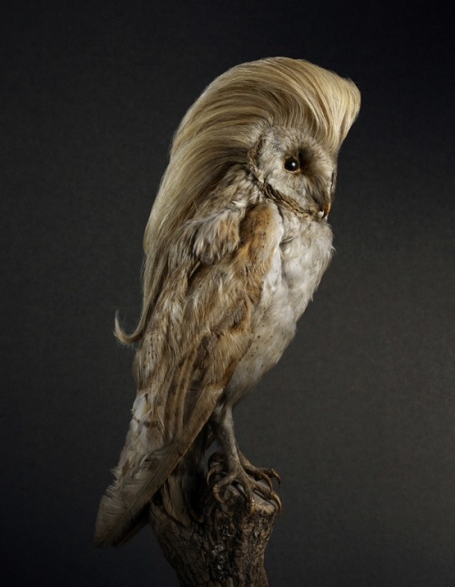 Rene Mesmen I - Owl Coiffure